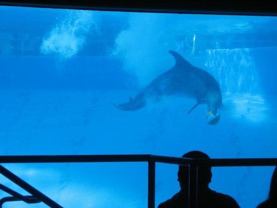 Texas State Aquarium: View from Dolphin Room.