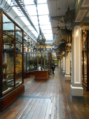 Irisches Nationalmuseum – Naturhistorische Abteilung: Upstairs - old world charm