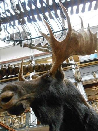 National Museum of Ireland - Natural History : Upstairs