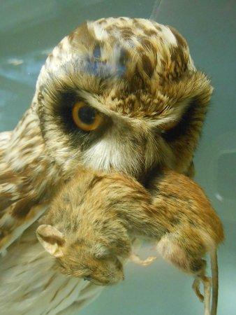 Irisches Nationalmuseum – Naturhistorische Abteilung: Dinner
