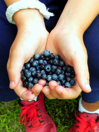 Rocktide Inn: Blueberries!
