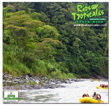Rios Tropicales: Primary Forest, Pacuare River