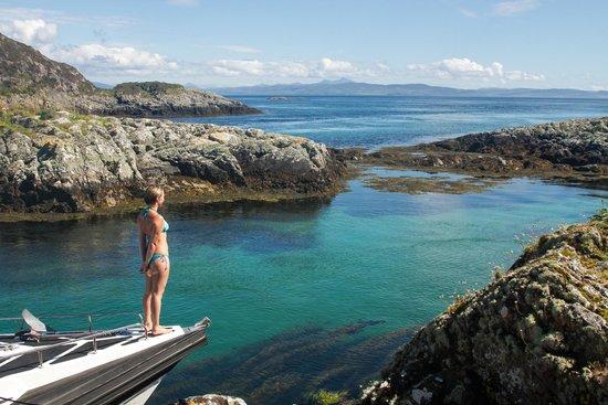 Basking Shark Scotland: Towards Mull-no its not the Med!