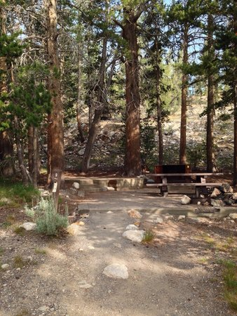 Inyo National Forest : Junction campground, site #9.  Set atop a small hill, shaded by trees.