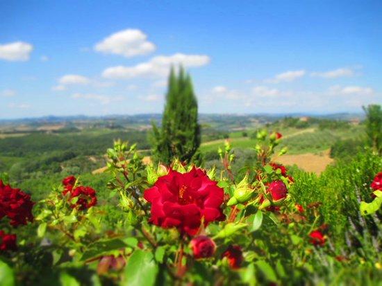 Castello di Fulignano : Jardins muito bem cuidados. Mais um atrativo do hotel!