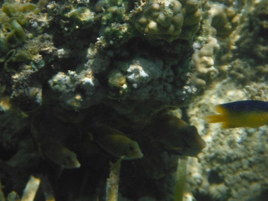 Grand Bahia Principe El Portillo : Snorkel