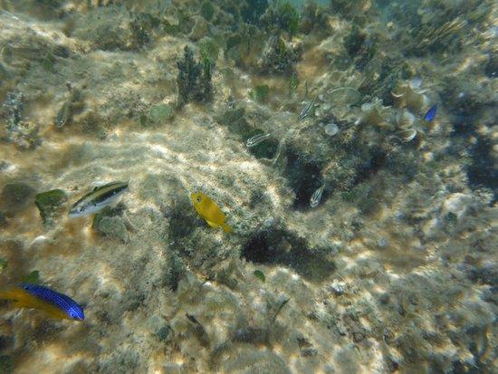 Grand Bahia Principe El Portillo : Pececillos