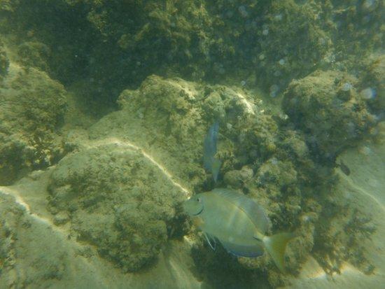 Grand Bahia Principe El Portillo : Otros peces