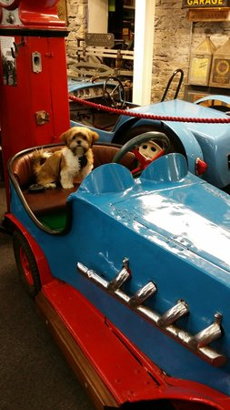 Lakeland Motor Museum: My puppy having a ride ...