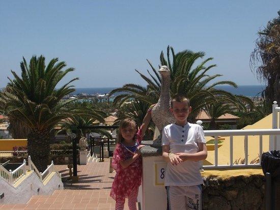 Club Caleta Dorada : hotel grounds