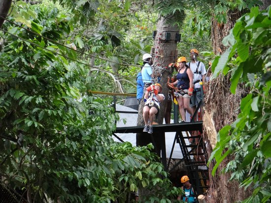 Canopy Adventure Zip Line Tours: The first line