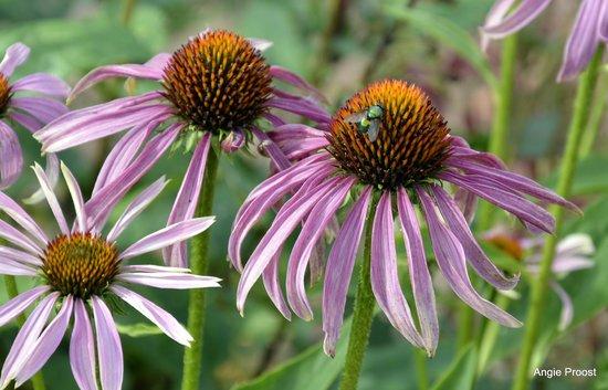 Dunkery Beacon Hotel : flowers from the lovely garden