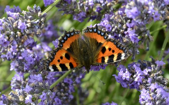 Dunkery Beacon Hotel : the garden is full of butterflies & bees
