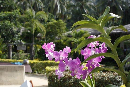 Amber Sands Beach Resort: 11