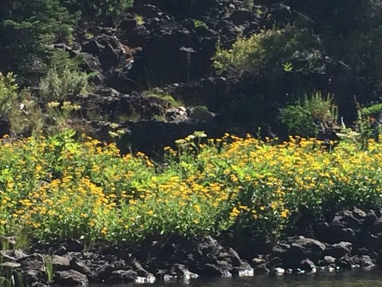 Wanderlust Tours: Beautiful wildflowers at the edge of the lake