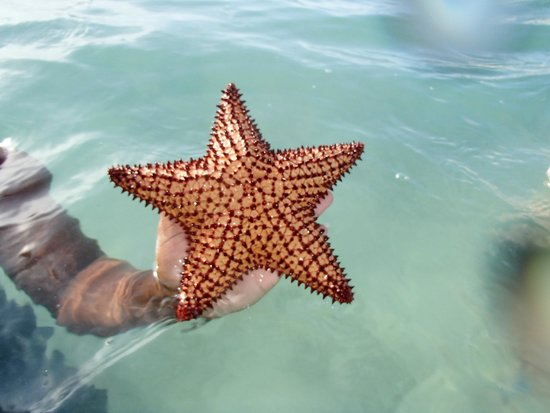 Occidental Caribe: found in the water