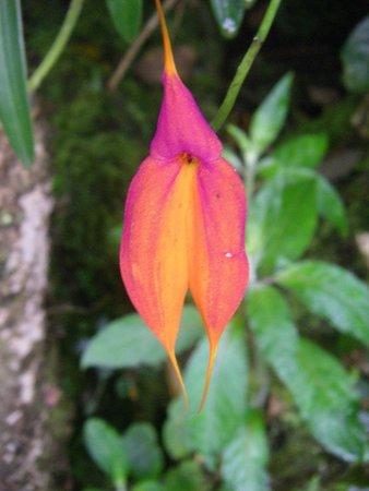 Belmond Sanctuary Lodge : Hotel garden