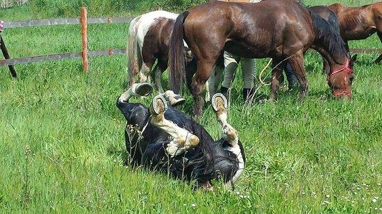 Vida Loca : raduno equestre