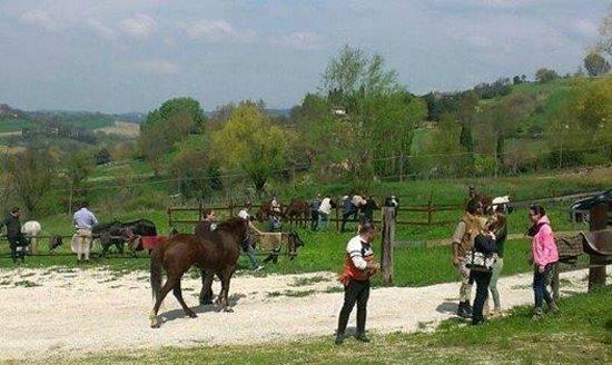 Vida Loca : raduno cavalli e cavalieri con ricca mangiata