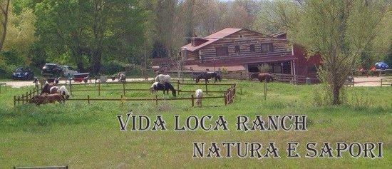 Vida Loca : i cavalli al paddok