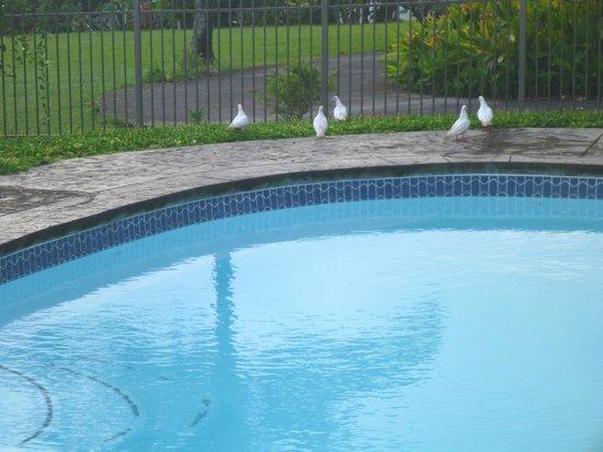 Maui Ocean Breezes: On site salt water Pool