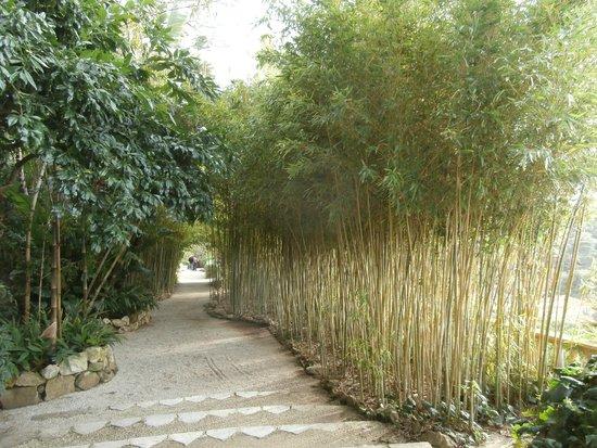 Villa & Jardins Ephrussi de Rothschild : giardini giapponesi