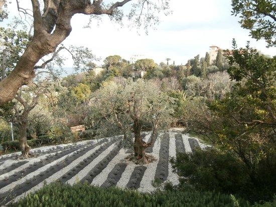 Villa & Jardins Ephrussi de Rothschild : giardino provenzale