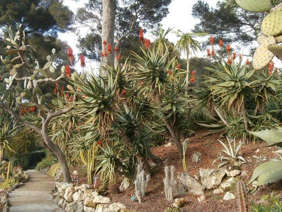 Villa & Jardins Ephrussi de Rothschild : giardino esotico