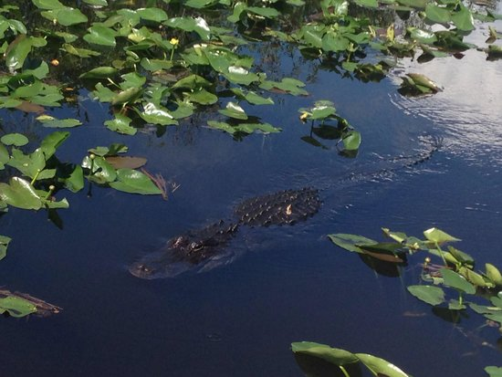 Airboat In Everglades : Scar