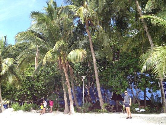 Coral View Island Resort: spaiggia