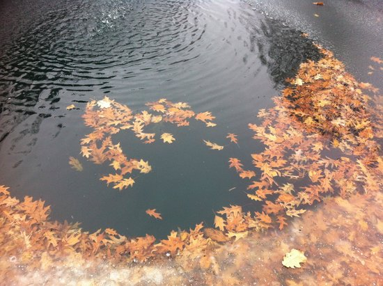 Indianapolis Museum of Art: Leaves frozen in fountain