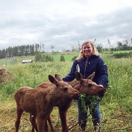 Moose Garden : Mysigt med älgkalvarna...