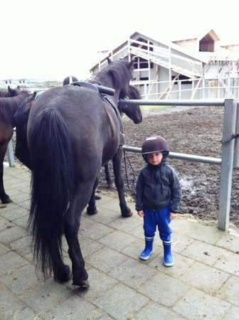 Viking Horses - Day Tours: Vikinghorses