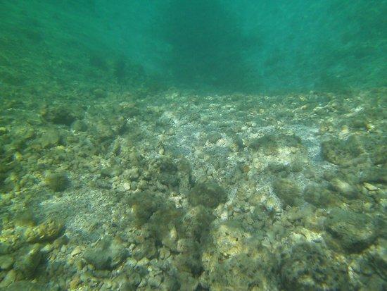 Sandals Regency La Toc Golf Resort and Spa : snorkeling at the grand