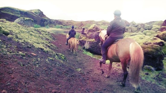 Viking Horses: Rauðhólar