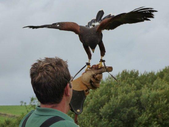 The Cornish Birds of Prey Centre: Flight