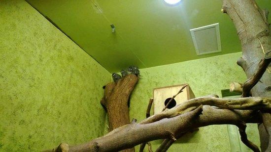 Edinburgh Zoo: Douroucouli