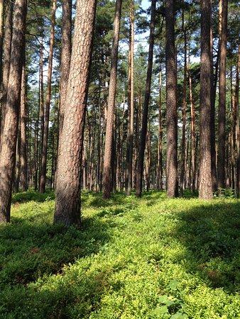 Dzintari Forest Park: Как здорово, что можно спрятаться от жары в парке