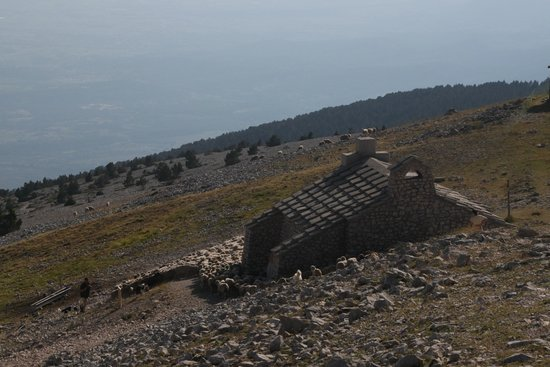 Mont Ventoux : Chapel surrounded by sheep