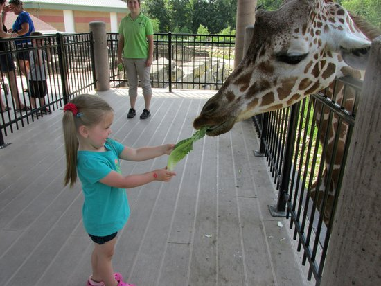 Niabi Zoo: Feeding the giraffes
