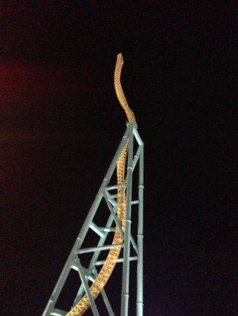 Cedar Point : Wicked Twister
