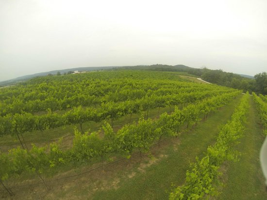 Chaumette Vineyards & Winery: Vineyard