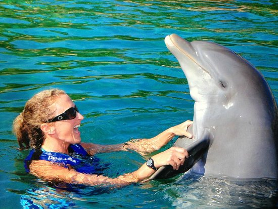 Delphinus Xcaret: Me and my friend Cab (mayan for Honey)