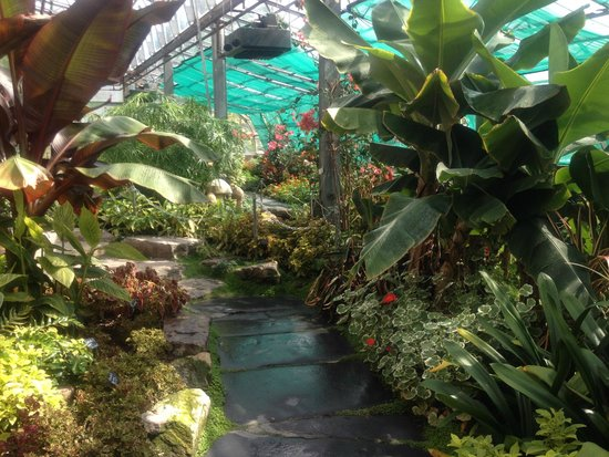 Pittencrieff Park: The greenhouse