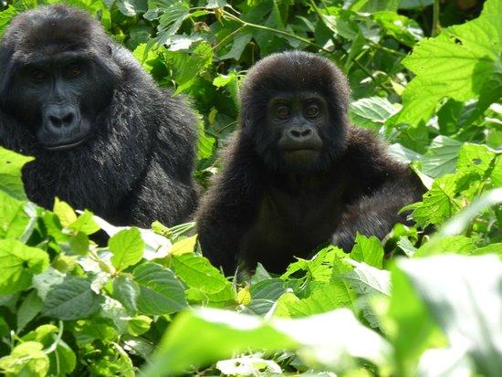 Bwindi Impenetrable National Park: Hi Baby
