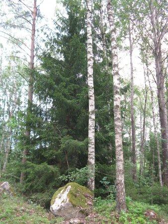Best Western Arlanda Hotellby: Nature Preserve