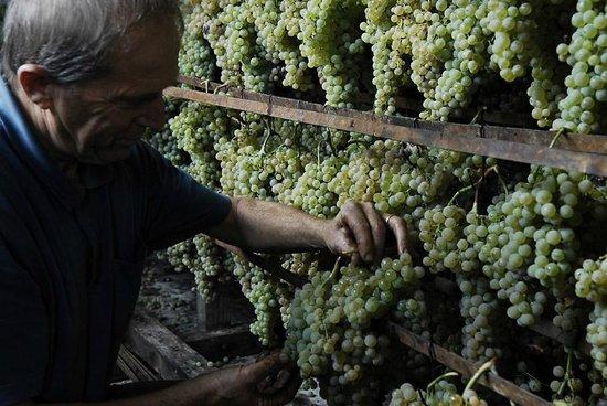 Relais La Torre: uva selezionata ed attaccata al castello per essiccarsi, diventerà poi dopo 3 o 5 anni vinsanto
