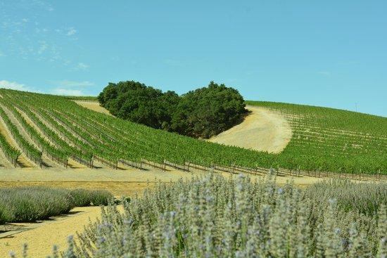 Niner Wine Estates: Heart Hill - also visible from the highway.