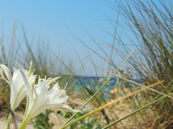 Angel Bay B&B Punta Prosciutto: vegetazione locale
