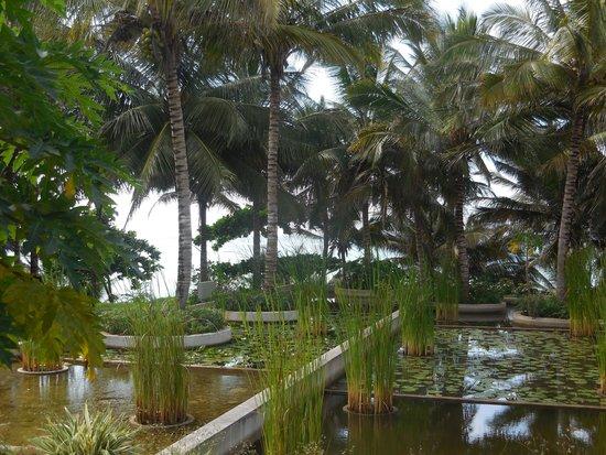 Melia Zanzibar: Devant notre chambre, magnifique